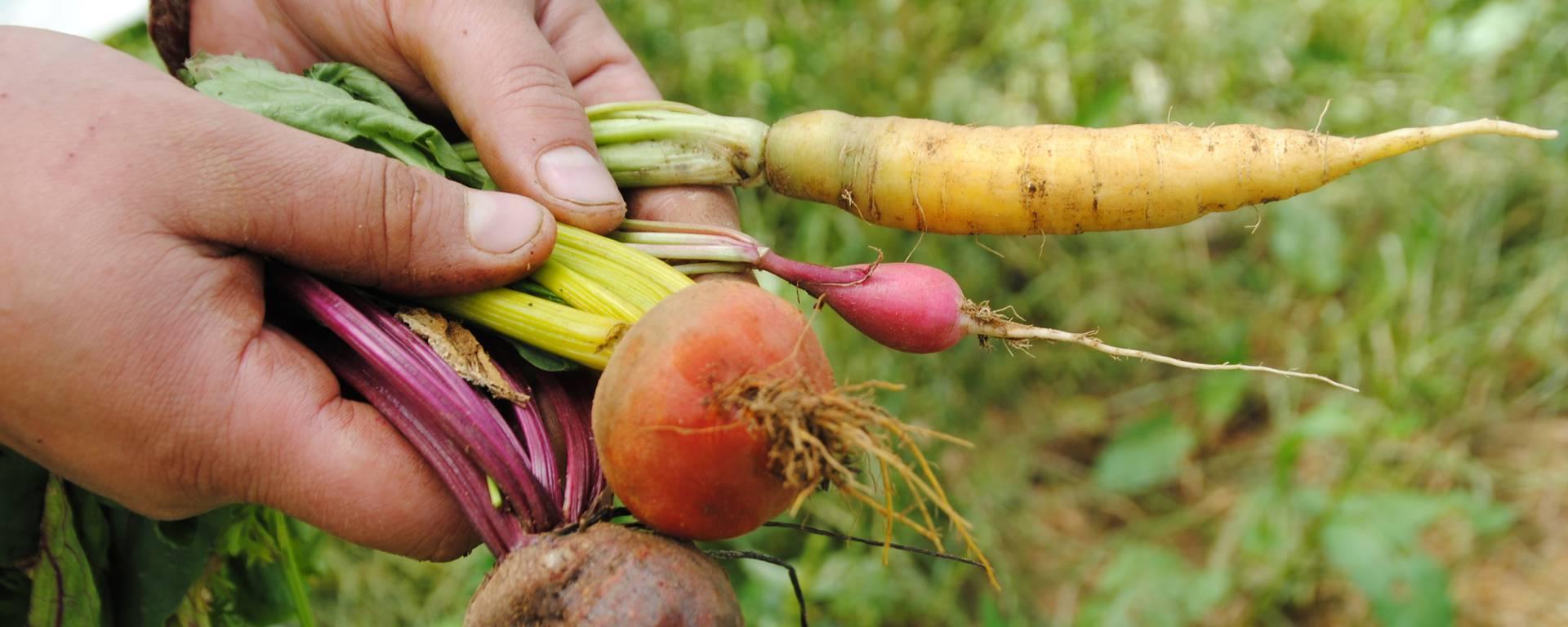 Légumes de la ferme - © Office de Tourisme du Pays de Mugron