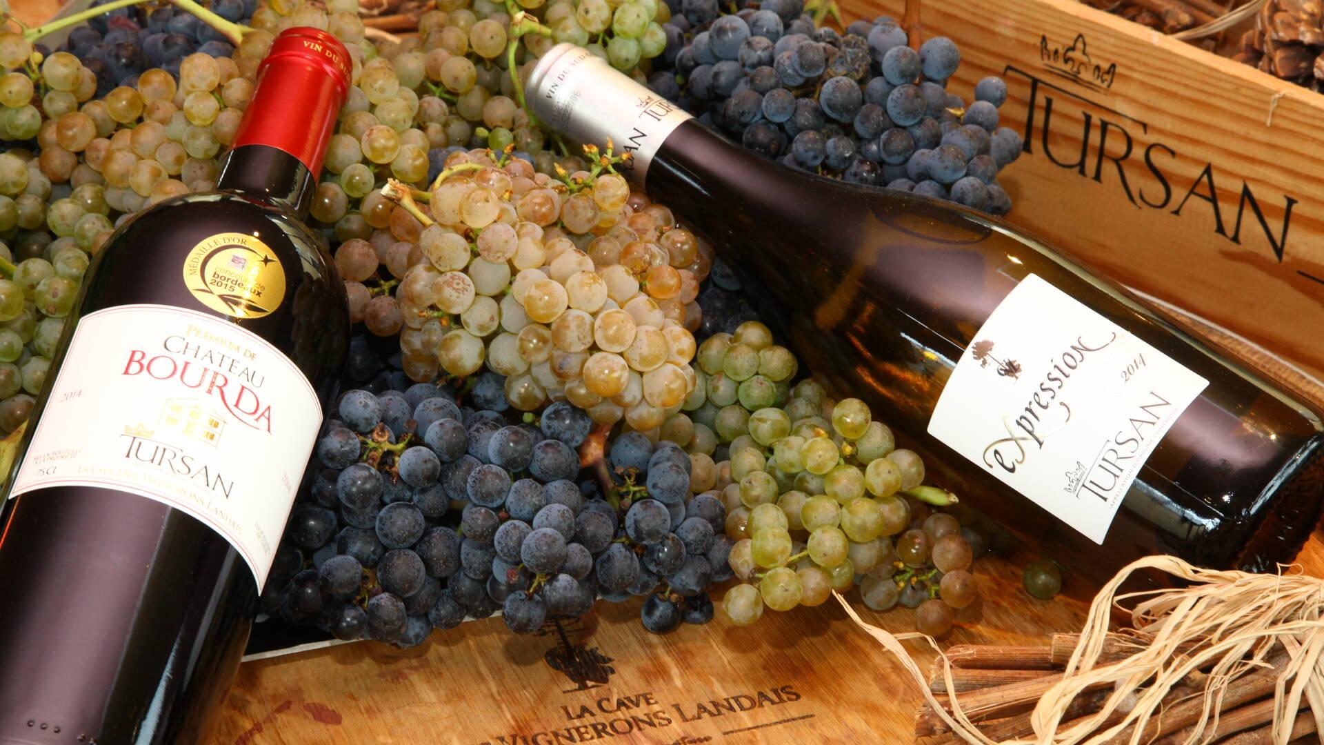 Les vins du Tursan
