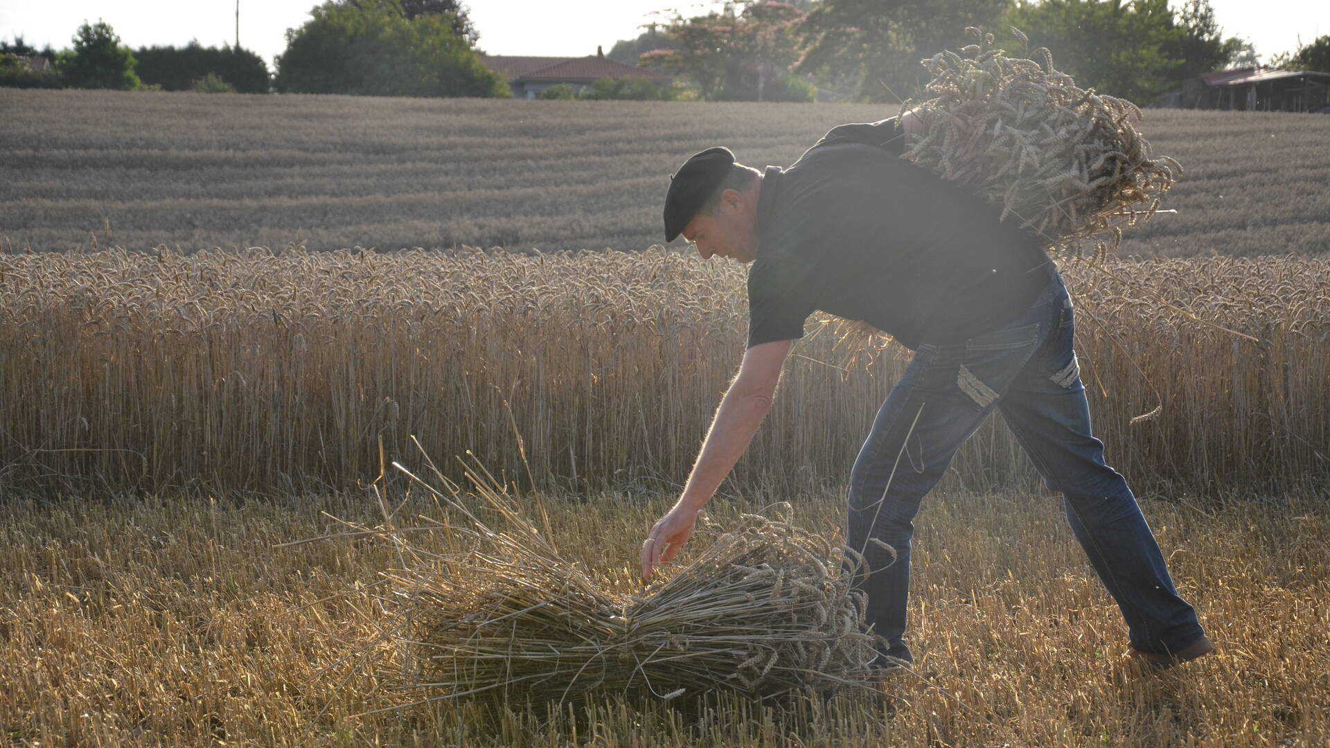 La battère du blé  : tradition en Landes Chalosse