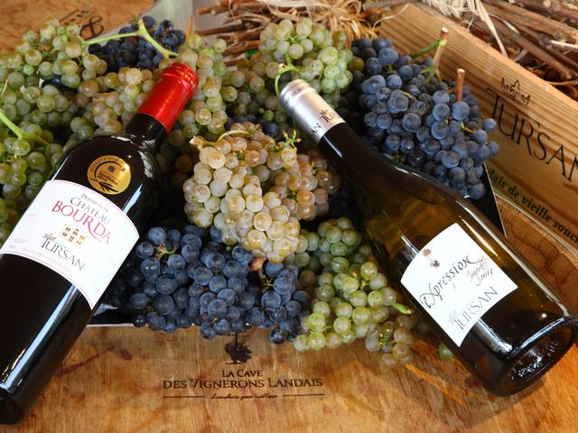 The wines of Tursan and Armagnac