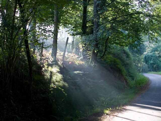La randonnée en Landes Chalosse